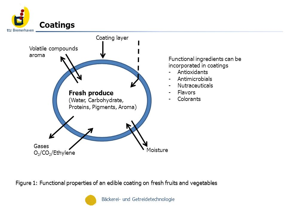 Bäckerei- und Getreidetechnologie Figure 1: Functional properties of an edible coating on fresh fruits and vegetables Functional ingredients can be incorporated in coatings -Antioxidants -Antimicrobials -Nutraceuticals -Flavors -Colorants Moisture Coating layer Volatile compounds aroma Gases O 2 /CO 2 /Ethylene Fresh produce (Water, Carbohydrate, Proteins, Pigments, Aroma) Coatings