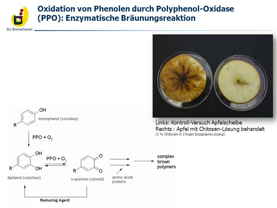 Bäckerei- und Getreidetechnologie Oxidation von Phenolen durch Polyphenol-Oxidase (PPO): Enzymatische Bräunungsreaktion Links: Kontroll-Versuch Apfels