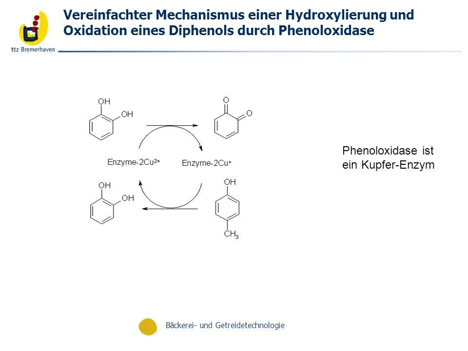 Bäckerei- und Getreidetechnologie Vereinfachter Mechanismus einer Hydroxylierung und Oxidation eines Diphenols durch Phenoloxidase Phenoloxidase ist e