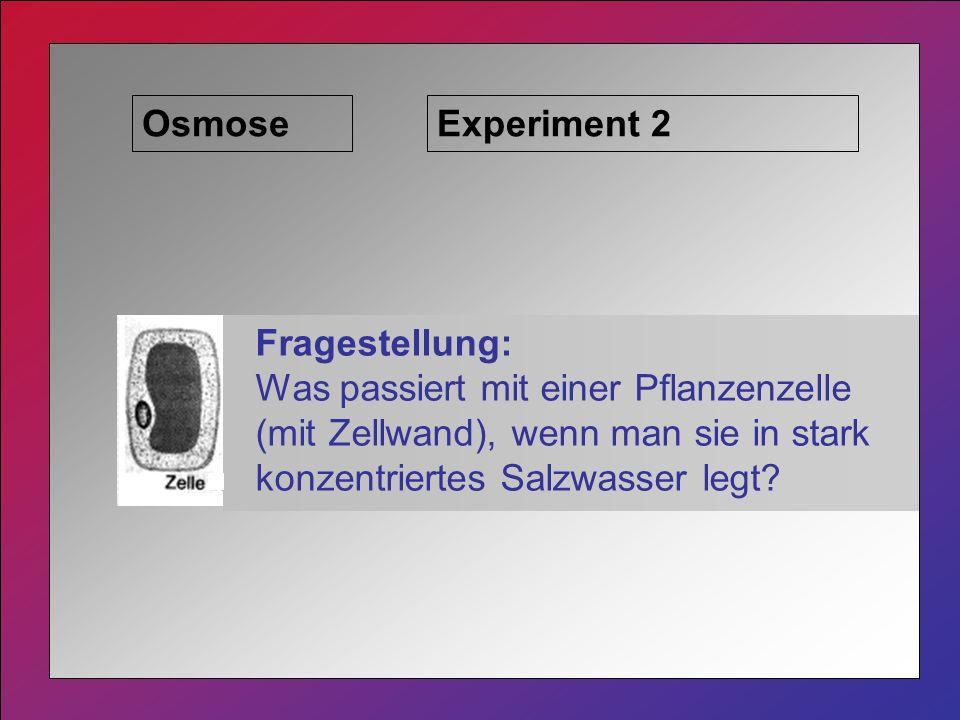 Osmose Fragestellung: Was passiert mit einer Pflanzenzelle (mit Zellwand), wenn man sie in stark konzentriertes Salzwasser legt.