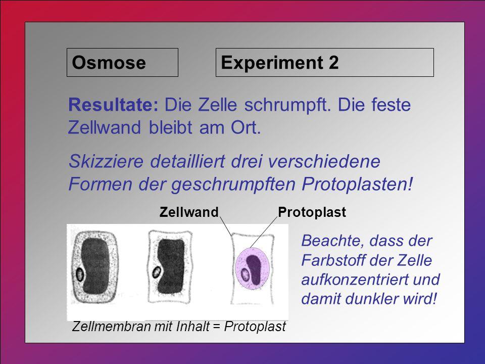 OsmoseExperiment 2 Resultate: Die Zelle schrumpft.