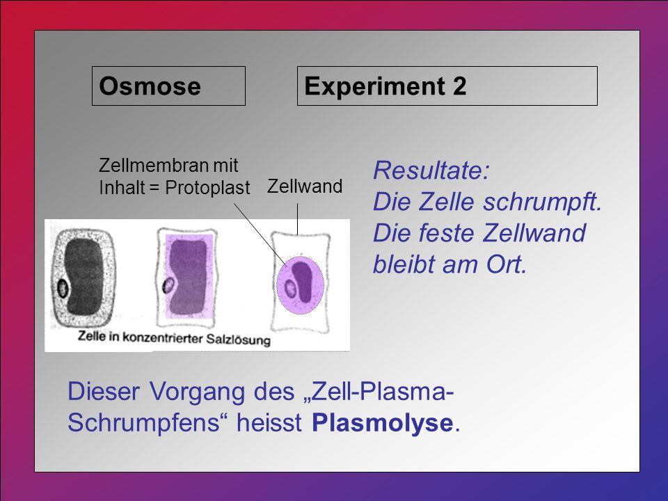 Osmose Resultate: Die Zelle schrumpft.Die feste Zellwand bleibt am Ort.