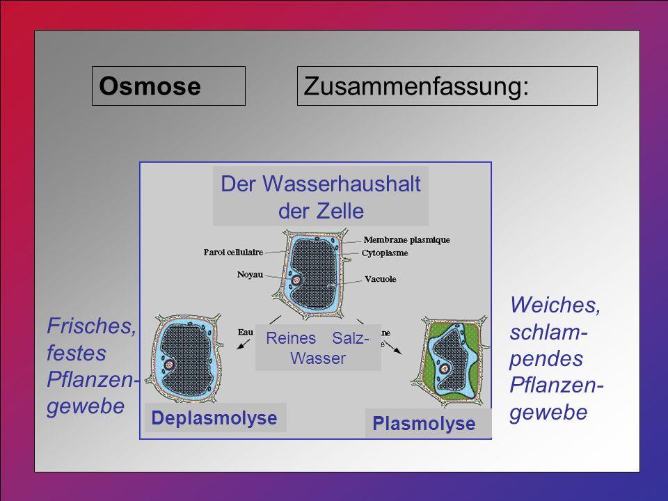 OsmoseZusammenfassung: Plasmolyse Deplasmolyse Der Wasserhaushalt der Zelle Reines Salz- Wasser Frisches, festes Pflanzen- gewebe Weiches, schlam- pendes Pflanzen- gewebe