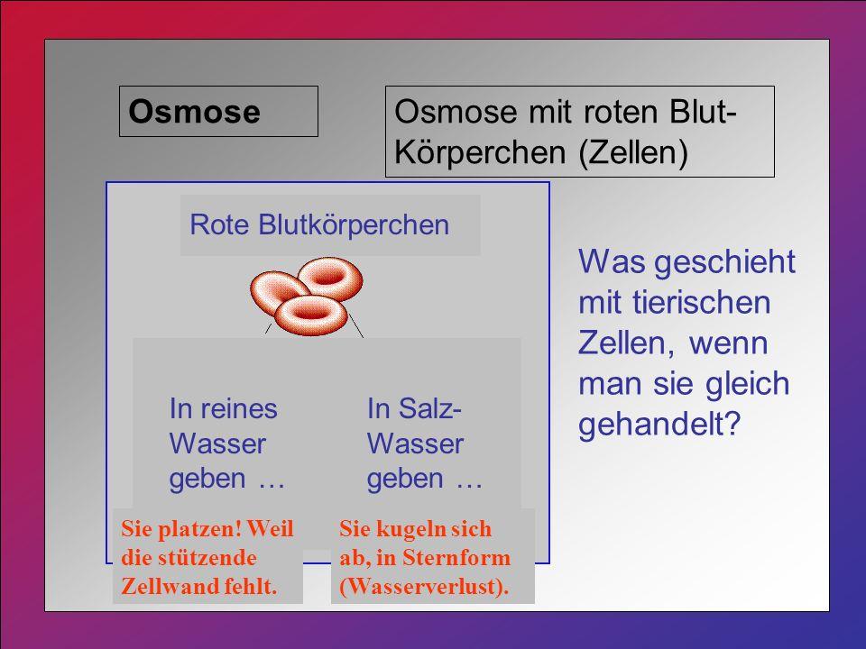 OsmoseOsmose mit roten Blut- Körperchen (Zellen) Was geschieht mit tierischen Zellen, wenn man sie gleich gehandelt.