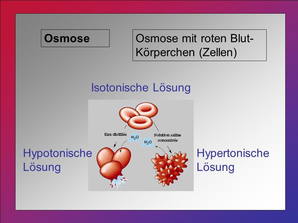 OsmoseOsmose mit roten Blut- Körperchen (Zellen) Isotonische Lösung Hypertonische Lösung Hypotonische Lösung