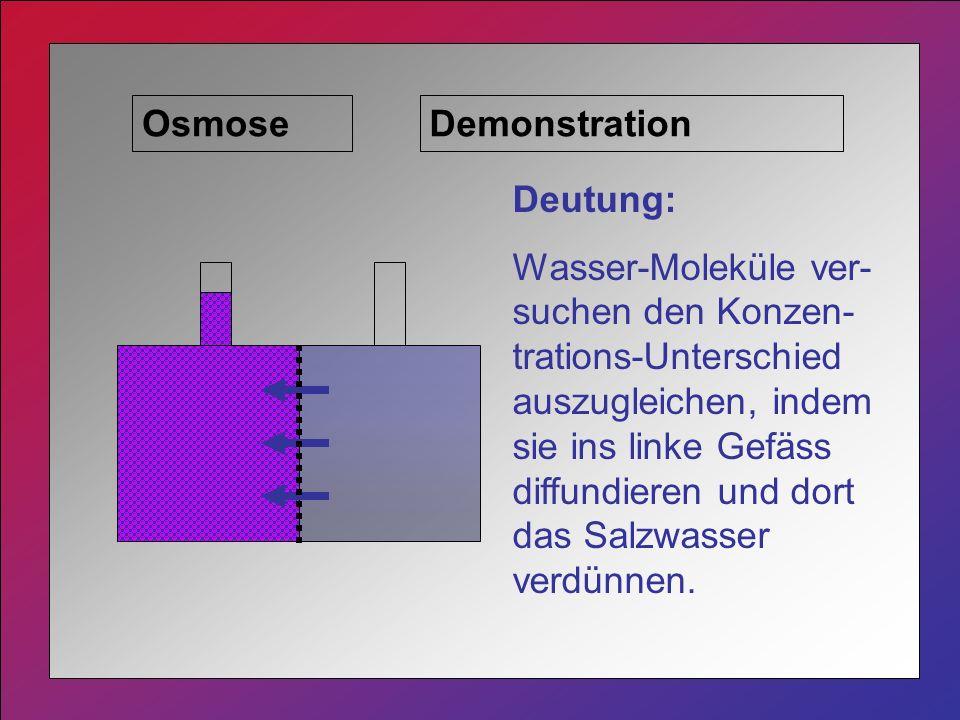 Osmose Deutung: Wasser-Moleküle ver- suchen den Konzen- trations-Unterschied auszugleichen, indem sie ins linke Gefäss diffundieren und dort das Salzwasser verdünnen.