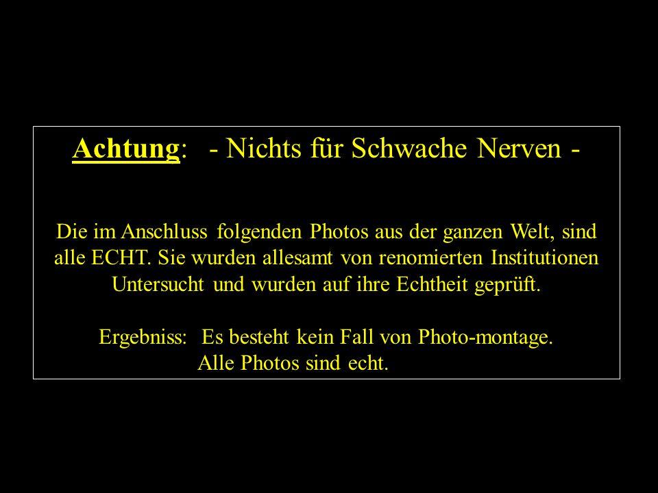 Achtung: - Nichts für Schwache Nerven - Die im Anschluss folgenden Photos aus der ganzen Welt, sind alle ECHT. Sie wurden allesamt von renomierten Ins