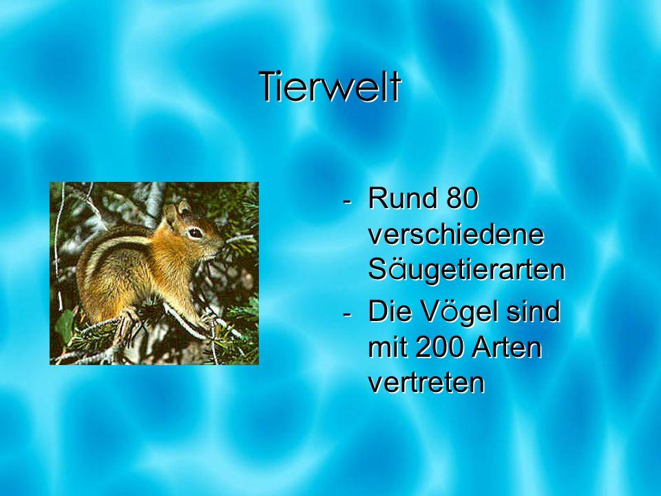 Tierwelt - Rund 80 verschiedene S ä ugetierarten - Die V ö gel sind mit 200 Arten vertreten - Rund 80 verschiedene S ä ugetierarten - Die V ö gel sind