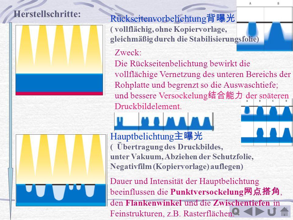 Q Herstellschritte: Zweck: Die Rückseitenbelichtung bewirkt die vollflächige Vernetzung des unteren Bereichs der Rohplatte und begrenzt so die Auswasc