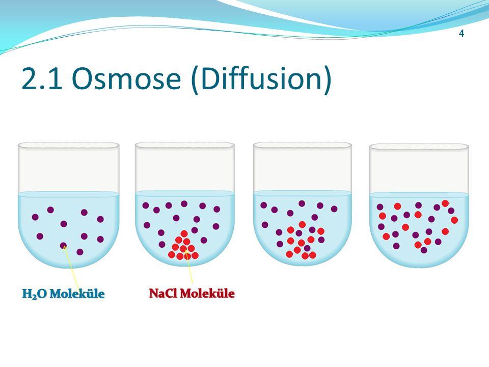2.2 Osmose semipermeable Membran hohe Konzentration niedrige Konzentration 5