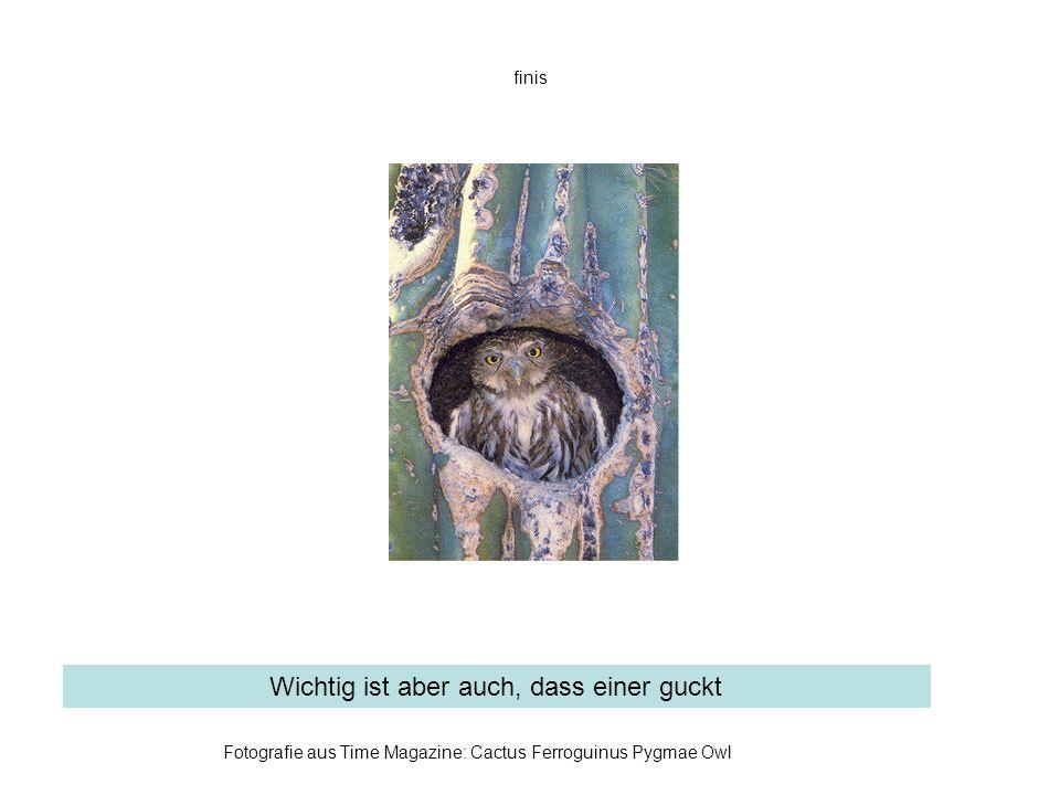 finis Fotografie aus Time Magazine: Cactus Ferroguinus Pygmae Owl Wichtig ist aber auch, dass einer guckt