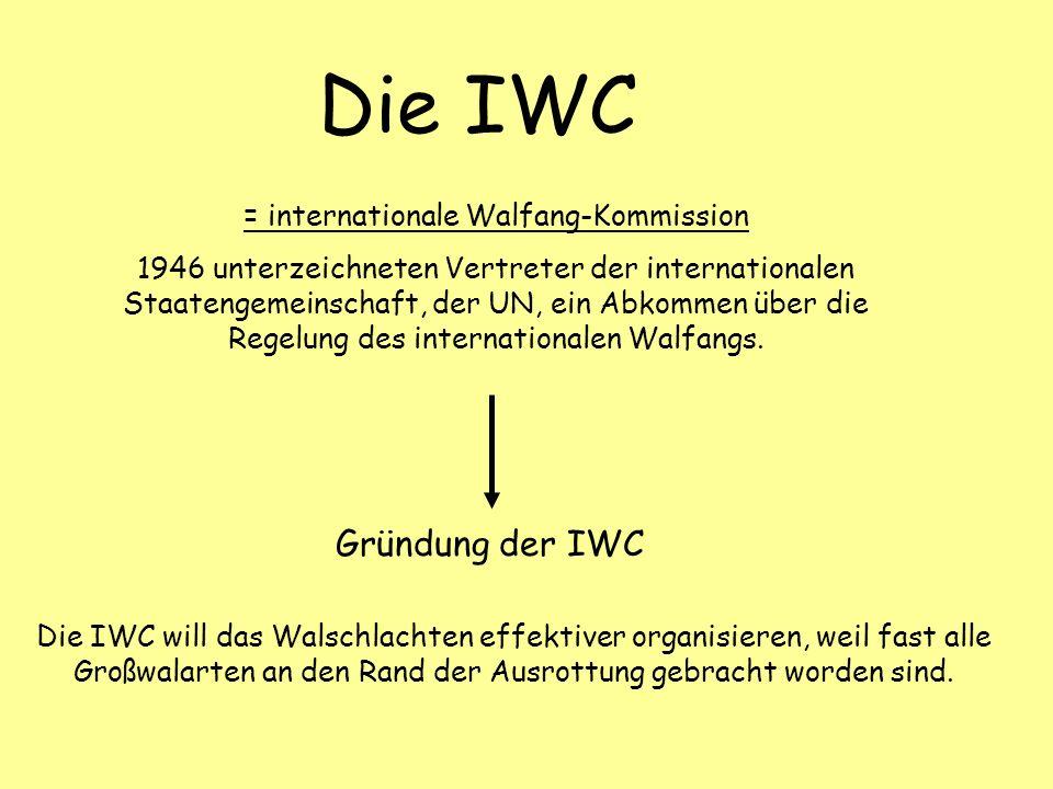 Die IWC = internationale Walfang-Kommission 1946 unterzeichneten Vertreter der internationalen Staatengemeinschaft, der UN, ein Abkommen über die Regelung des internationalen Walfangs.