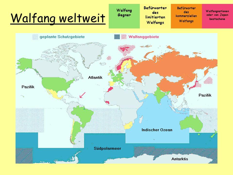 Walfang Gegner Befürworter des limitierten Walfangs Befürworter des kommerziellen Walfangs Walfangnationen oder von Japan bestochene Walfang weltweit