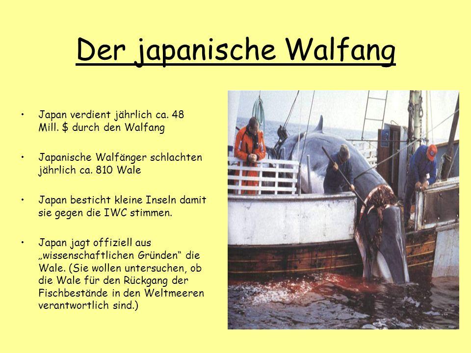 Der japanische Walfang Japan verdient jährlich ca. 48 Mill. $ durch den Walfang Japanische Walfänger schlachten jährlich ca. 810 Wale Japan besticht k