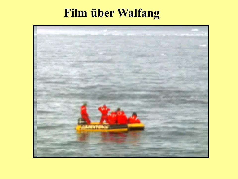 Film über Walfang
