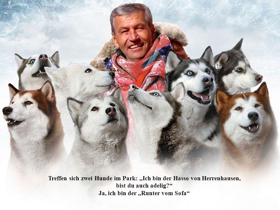 Treffen sich zwei Hunde im Park: Ich bin der Hasso von Herrenhausen, bist du auch adelig.