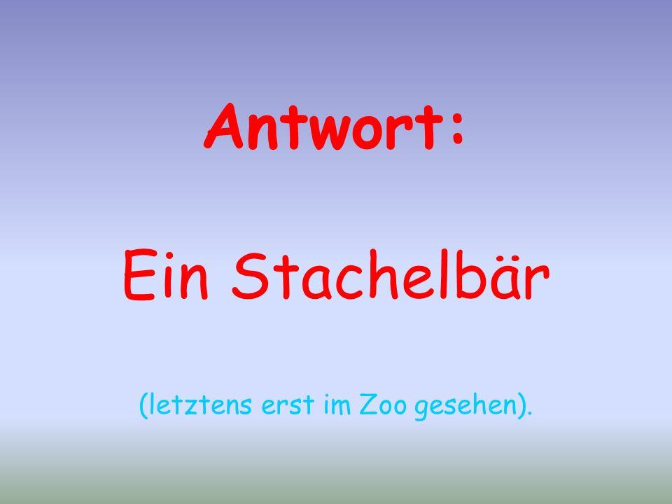 Antwort: Ein Stachelbär (letztens erst im Zoo gesehen).
