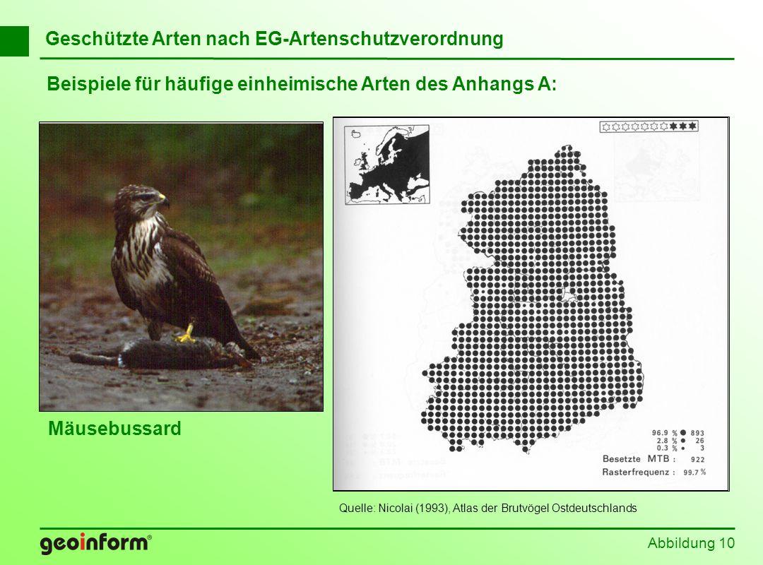 Beispiele für häufige einheimische Arten des Anhangs A: Abbildung 10 Geschützte Arten nach EG-Artenschutzverordnung Mäusebussard Quelle: Nicolai (1993