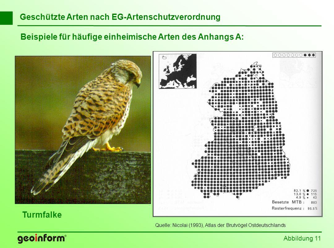Beispiele für häufige einheimische Arten des Anhangs A: Abbildung 11 Geschützte Arten nach EG-Artenschutzverordnung Turmfalke Quelle: Nicolai (1993),