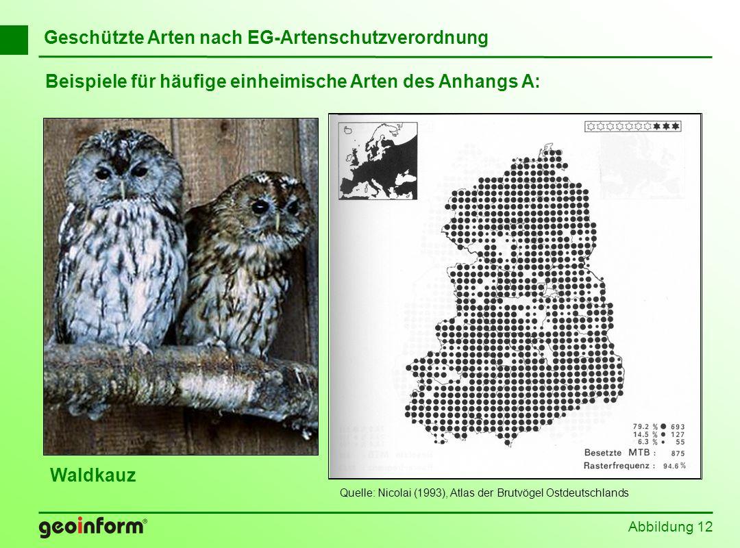 Beispiele für häufige einheimische Arten des Anhangs A: Abbildung 12 Geschützte Arten nach EG-Artenschutzverordnung Waldkauz Quelle: Nicolai (1993), A