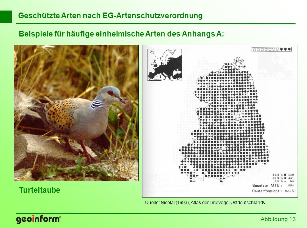 Beispiele für häufige einheimische Arten des Anhangs A: Abbildung 13 Geschützte Arten nach EG-Artenschutzverordnung Turteltaube Quelle: Nicolai (1993)