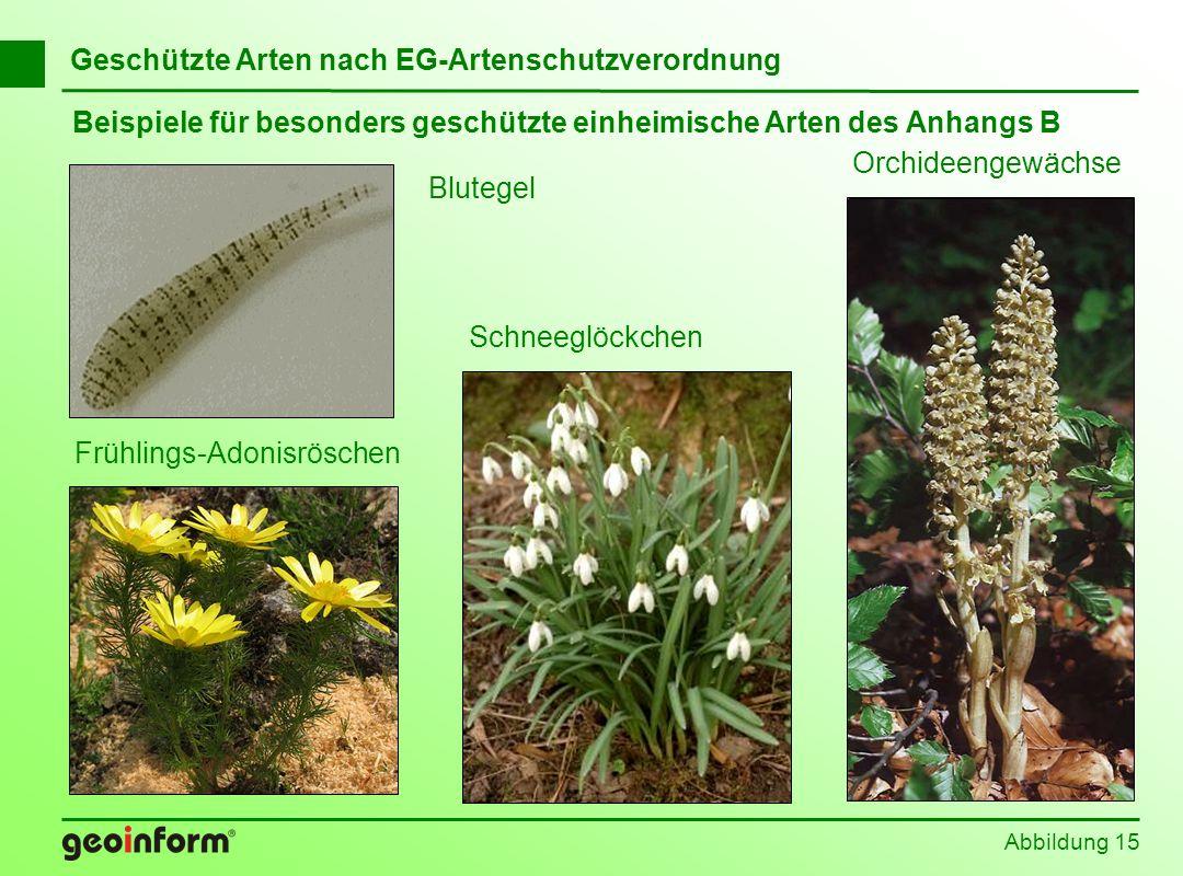 Abbildung 15 Geschützte Arten nach EG-Artenschutzverordnung Beispiele für besonders geschützte einheimische Arten des Anhangs B Blutegel Schneeglöckch