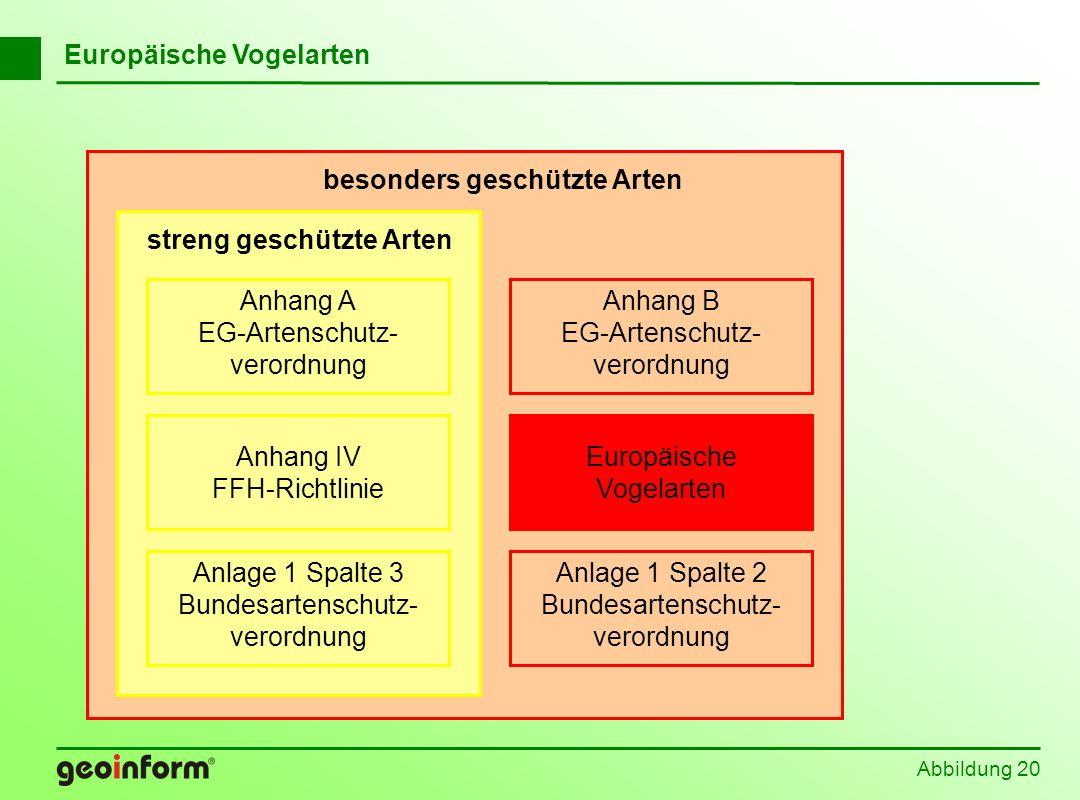 Abbildung 20 Europäische Vogelarten Anhang B EG-Artenschutz- verordnung Anlage 1 Spalte 2 Bundesartenschutz- verordnung Europäische Vogelarten besonde