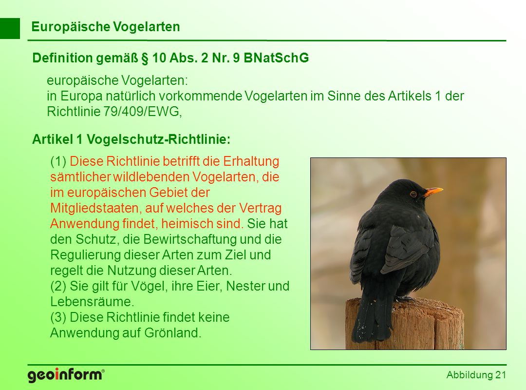 Abbildung 21 Europäische Vogelarten Artikel 1 Vogelschutz-Richtlinie: (1) Diese Richtlinie betrifft die Erhaltung sämtlicher wildlebenden Vogelarten,