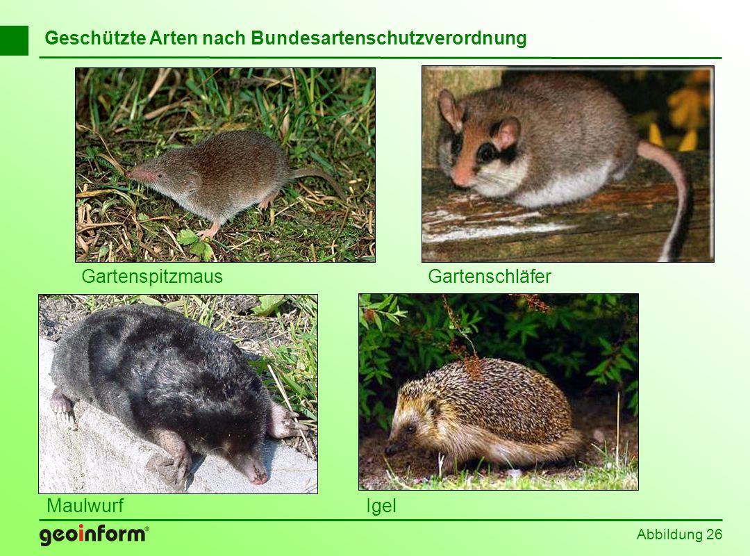 Abbildung 26 Geschützte Arten nach Bundesartenschutzverordnung GartenspitzmausGartenschläfer MaulwurfIgel