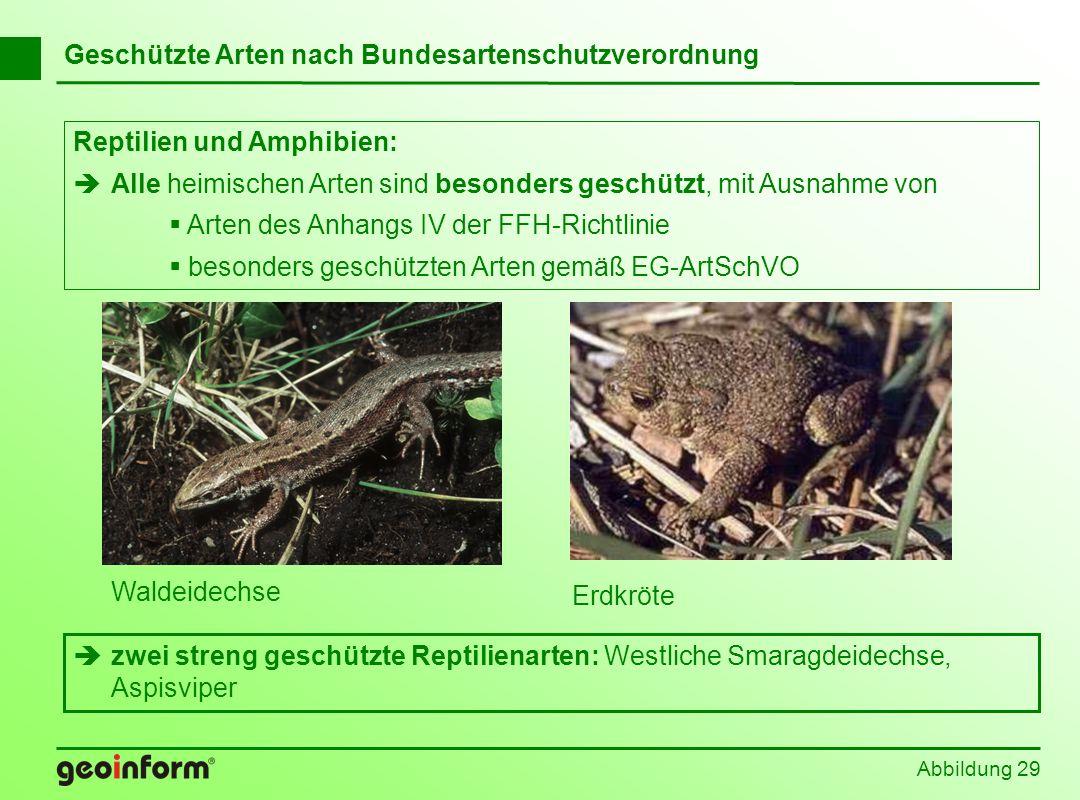 Abbildung 29 Geschützte Arten nach Bundesartenschutzverordnung Reptilien und Amphibien: Alle heimischen Arten sind besonders geschützt, mit Ausnahme v