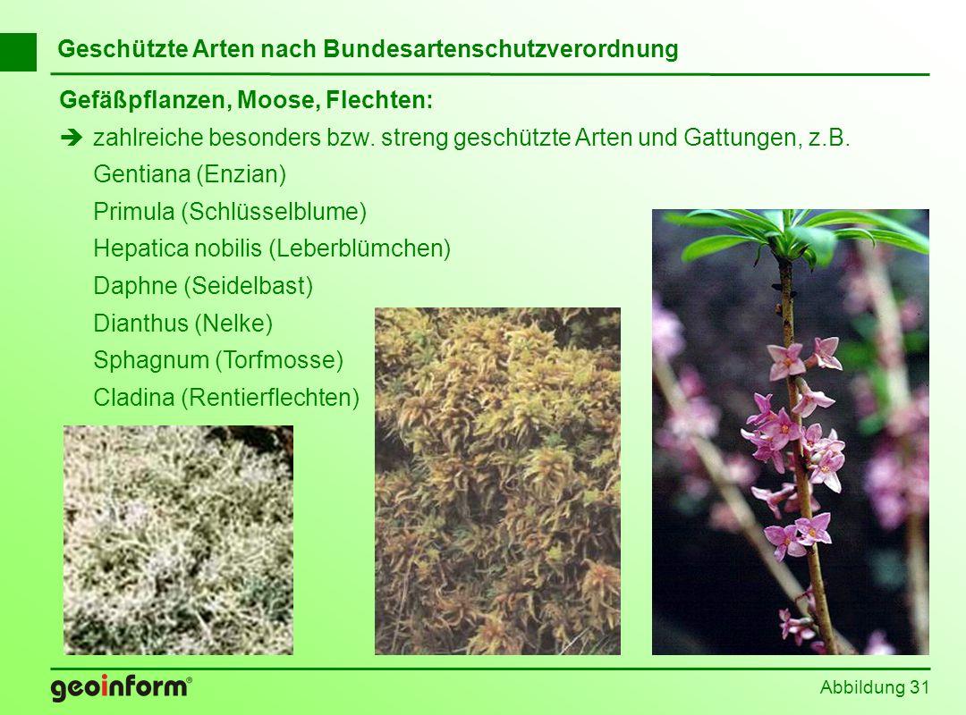 Abbildung 31 Geschützte Arten nach Bundesartenschutzverordnung Gefäßpflanzen, Moose, Flechten: zahlreiche besonders bzw. streng geschützte Arten und G