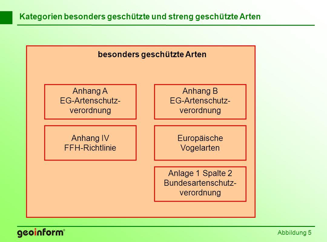 Abbildung 5 Kategorien besonders geschützte und streng geschützte Arten Anhang B EG-Artenschutz- verordnung Anlage 1 Spalte 2 Bundesartenschutz- veror