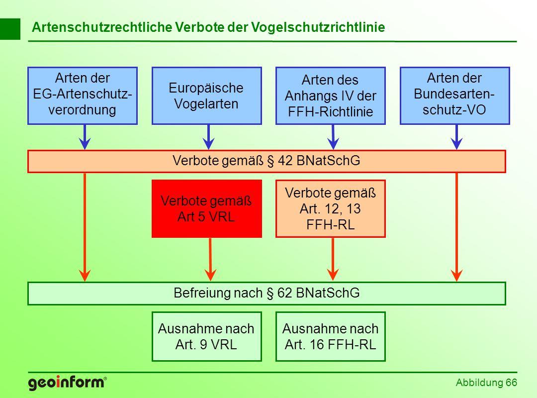 Abbildung 66 Befreiung nach § 62 BNatSchG Europäische Vogelarten Arten der EG-Artenschutz- verordnung Arten der Bundesarten- schutz-VO Arten des Anhan