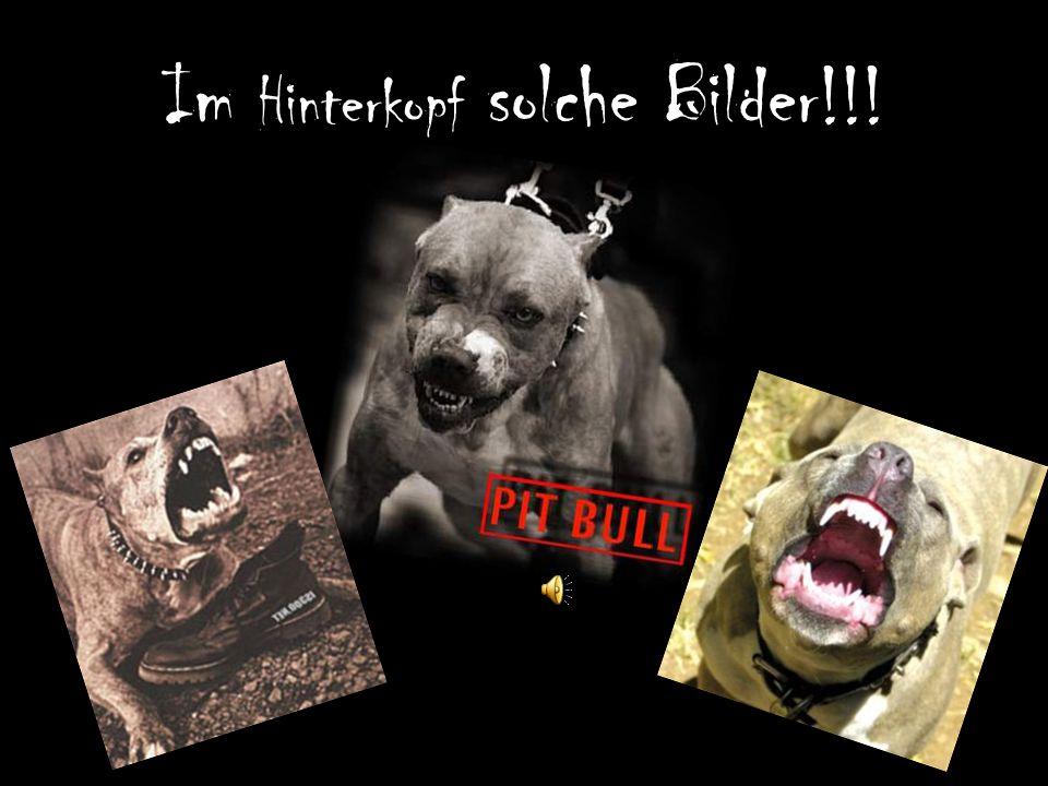 Die Wahrheit ist viel schrecklicher … !!.Pitbull !!.