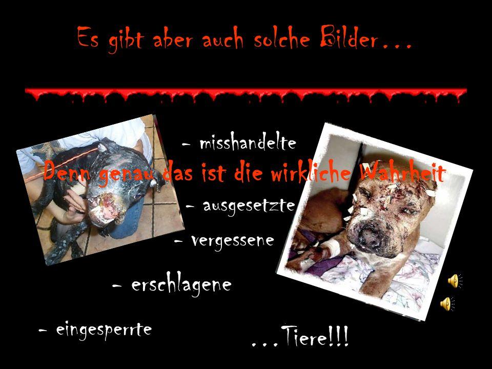Es gibt aber auch solche Bilder… - misshandelte - ausgesetzte - vergessene - erschlagene - eingesperrte …Tiere!!.