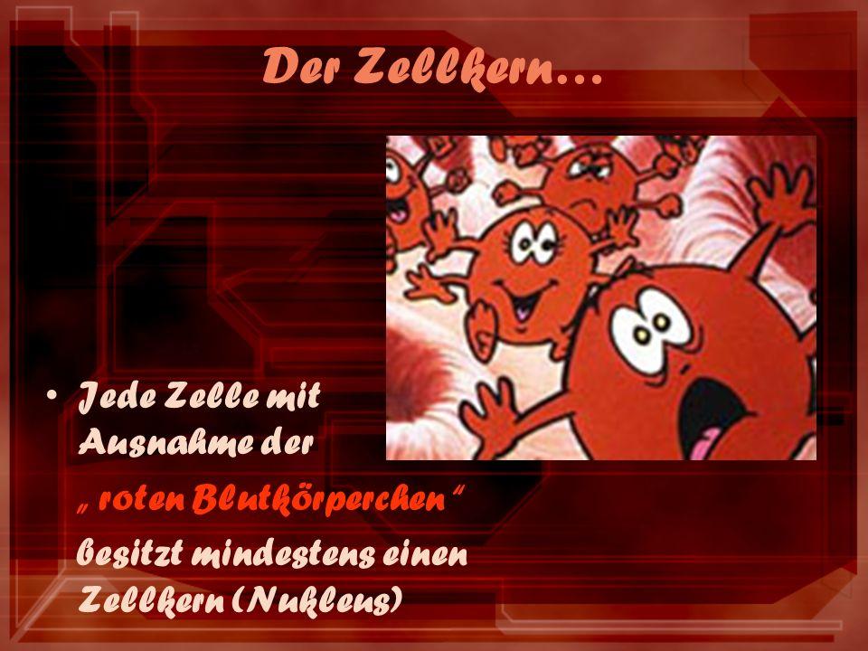 Der Zellkern… Jede Zelle mit Ausnahme der roten Blutkörperchen besitzt mindestens einen Zellkern (Nukleus)