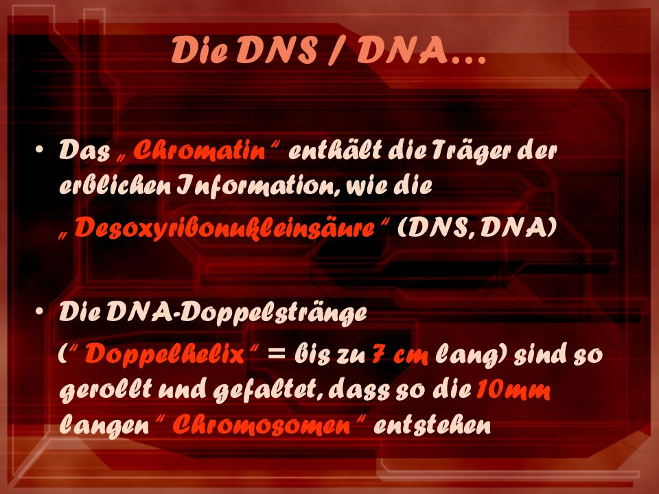 Die DNS / DNA… Das Chromatin enthält die Träger der erblichen Information, wie die Desoxyribonukleinsäure (DNS, DNA) Die DNA-Doppelstränge ( Doppelhelix = bis zu 7 cm lang) sind so gerollt und gefaltet, dass so die 10mm langen Chromosomen entstehen
