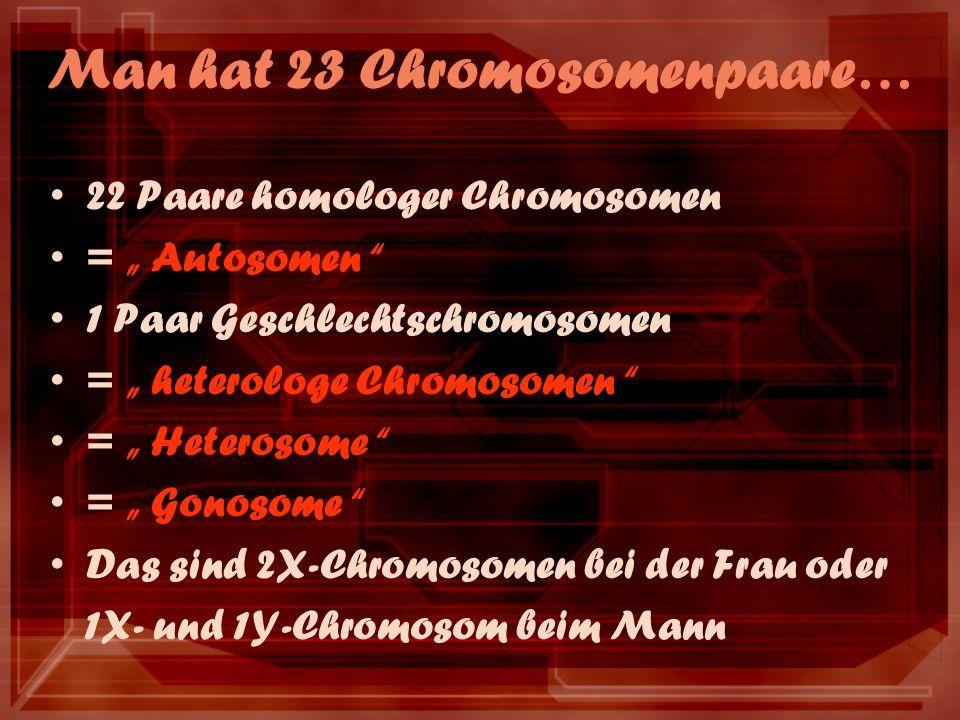 Man hat 23 Chromosomenpaare… 22 Paare homologer Chromosomen = Autosomen 1 Paar Geschlechtschromosomen = heterologe Chromosomen = Heterosome = Gonosome Das sind 2X-Chromosomen bei der Frau oder 1X- und 1Y-Chromosom beim Mann