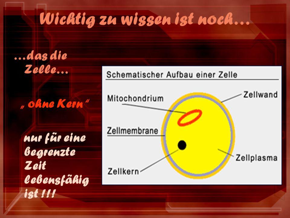 Wichtig zu wissen ist noch… …das die Zelle… ohne Kern nur für eine begrenzte Zeit lebensfähig ist !!!