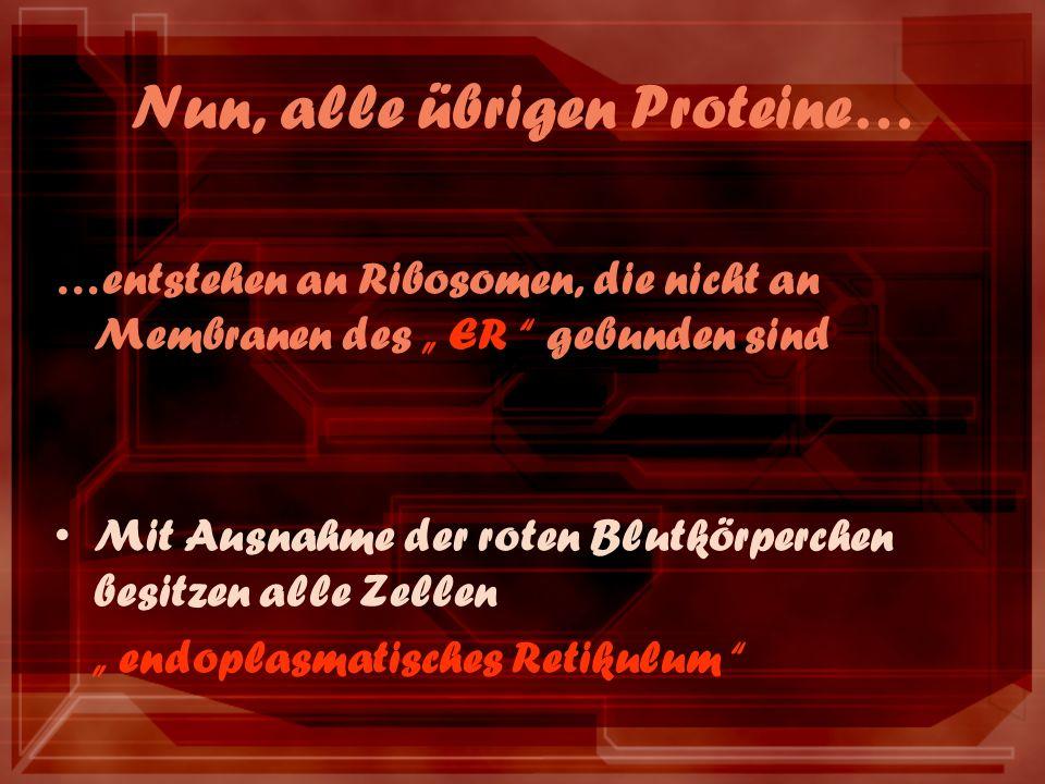 Nun, alle übrigen Proteine… …entstehen an Ribosomen, die nicht an Membranen des ER gebunden sind Mit Ausnahme der roten Blutkörperchen besitzen alle Zellen endoplasmatisches Retikulum