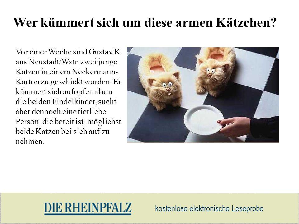 Wer kümmert sich um diese armen Kätzchen? Vor einer Woche sind Gustav K. aus Neustadt/Wstr. zwei junge Katzen in einem Neckermann- Karton zu geschickt