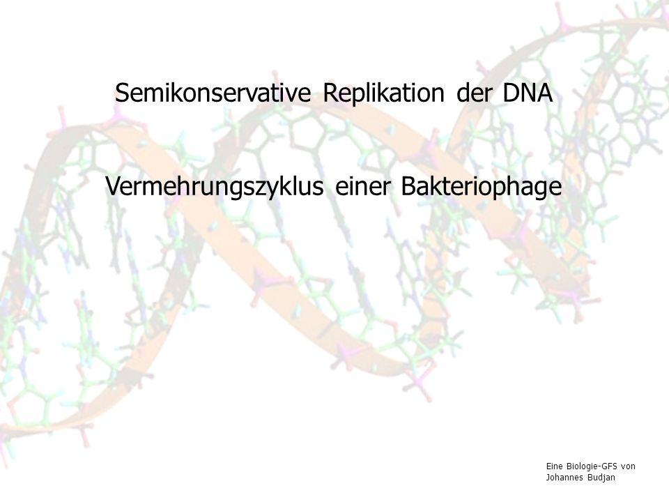 Semikonservative Replikation der DNA Vermehrungszyklus einer Bakteriophage Eine Biologie-GFS von Johannes Budjan