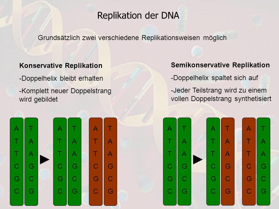 Replikation der DNA Grundsätzlich zwei verschiedene Replikationsweisen möglich Konservative Replikation -Doppelhelix bleibt erhalten -Komplett neuer D
