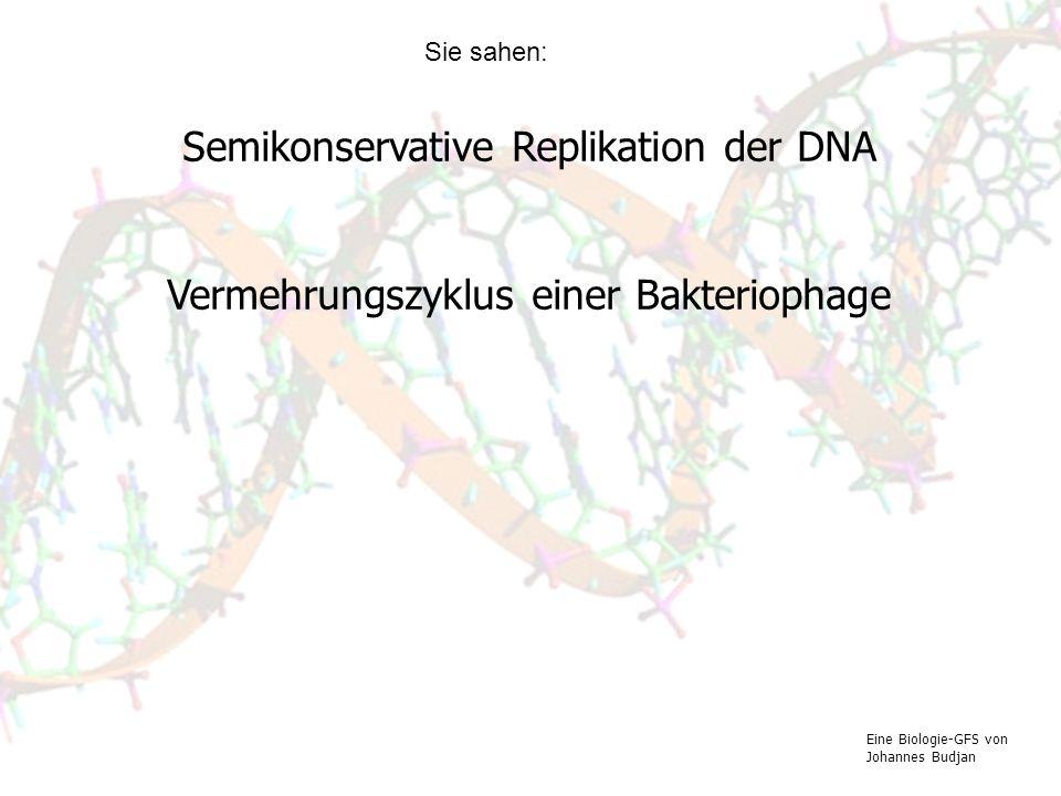 Semikonservative Replikation der DNA Vermehrungszyklus einer Bakteriophage Eine Biologie-GFS von Johannes Budjan Sie sahen:
