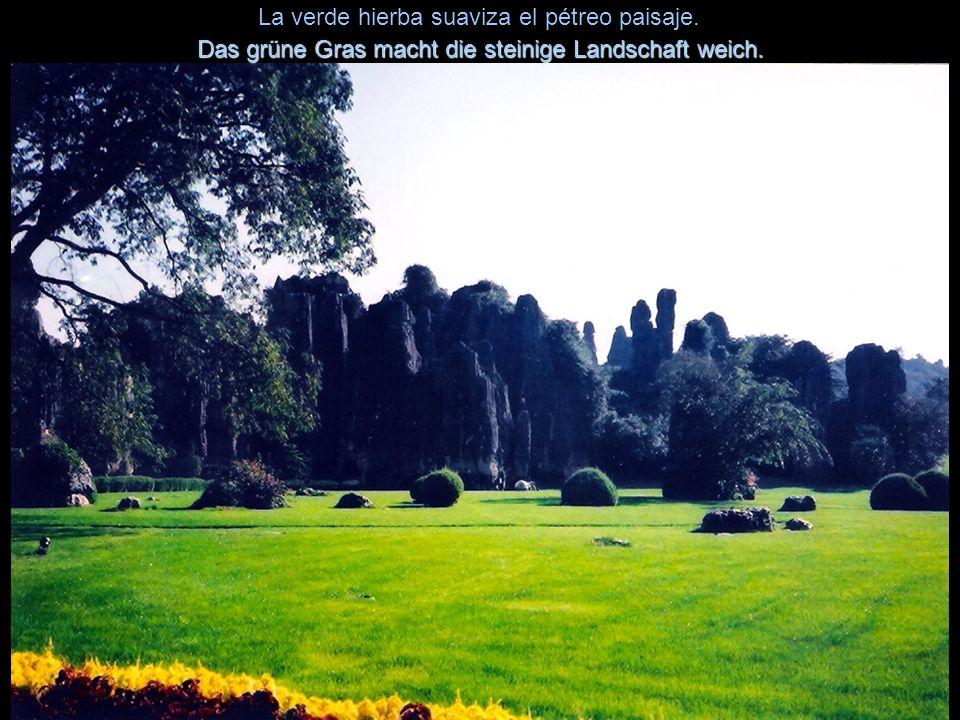 La verde hierba suaviza el pétreo paisaje.Das grüne Gras macht die steinige Landschaft weich.