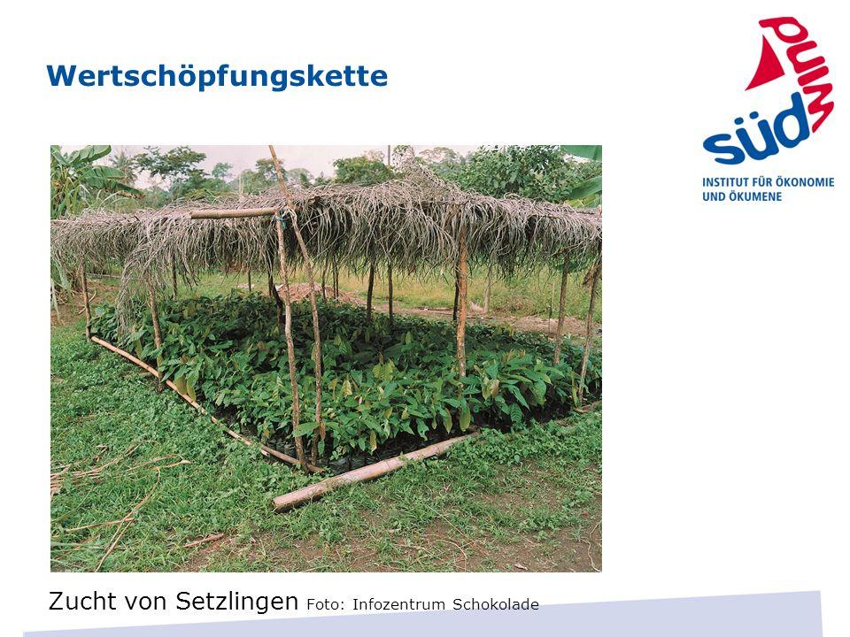 Wertschöpfungskette Zucht von Setzlingen Foto: Infozentrum Schokolade