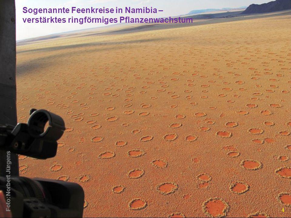 sogenannte Feenkreise in Namibia sind Einschlagstellen von Abtropfungen eines großen Eisen-Nickel-Meteoriten (Hoba-Meteorit) Foto: Norbert Jürgens 15