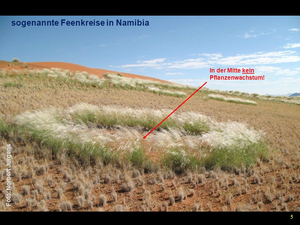 sogenannte Feenkreise in Namibia Foto: Norbert Jürgens In der Mitte kein Pflanzenwachstum! 5