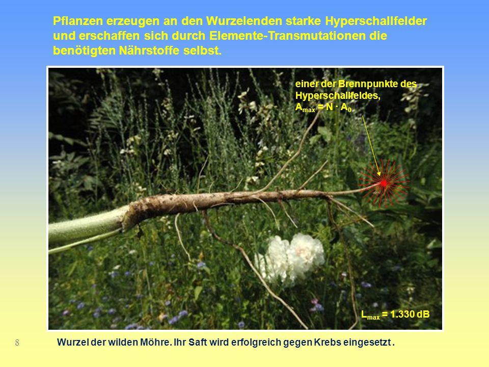 8 Pflanzen erzeugen an den Wurzelenden starke Hyperschallfelder und erschaffen sich durch Elemente-Transmutationen die benötigten Nährstoffe selbst. e