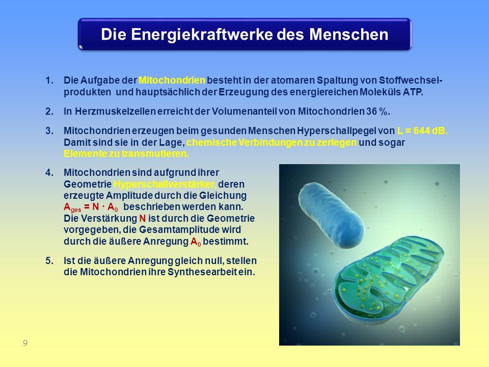 Die Energiekraftwerke des Menschen 9 1.Die Aufgabe der Mitochondrien besteht in der atomaren Spaltung von Stoffwechsel- produkten und hauptsächlich de